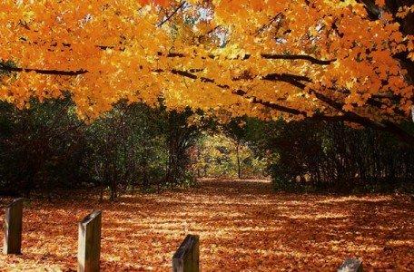toronto park in the fall season