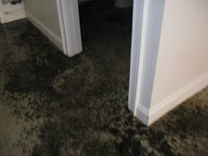 damage floor after sewer backup on mississauga floor